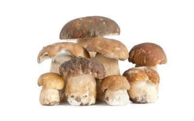 Funghi porcini, il cibo degli dei