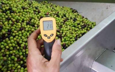 Le olive dall'albero al frantoio