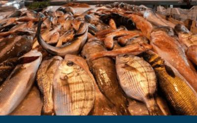 Comprare il pesce di stagione