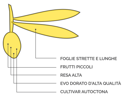 Le Cultivar 2