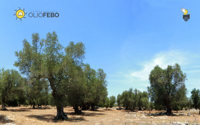 L'olivicoltura è multifunzionale